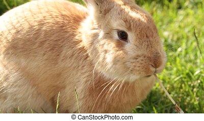 Rabbit .