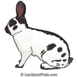 RABBIT - The white rabbit with black spots. The long black ...