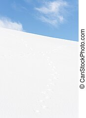 Rabbit tracks crossing in snow