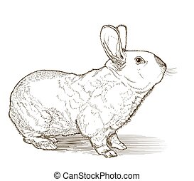 rabbit vector drawing on white