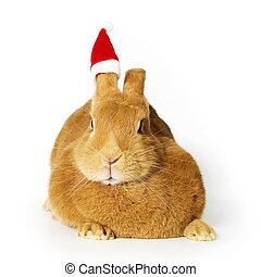 Rabbit wearing santa hat - Rabbit wearing a santa hat on one...