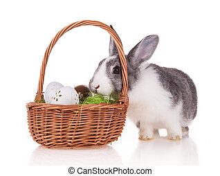 Rabbit with basket on white background - Studio shot of...