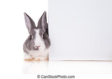 Rabbit with blank sheet on white background - Studio shot of...