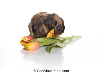 Rabbit with bow tie and tulip