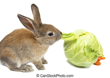 Rabbit with carrots and cabbage