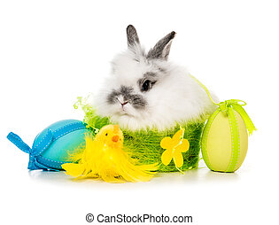 rabbit with colored eggs - Easter pictures - rabbit with...