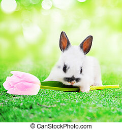rabbit with flower in park