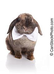 Rabbit with white bow tie