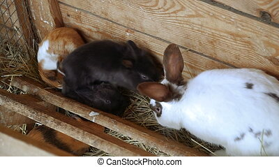 Rabbits and guinea pigs eat