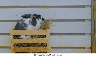 Rabbits eat hay in farm
