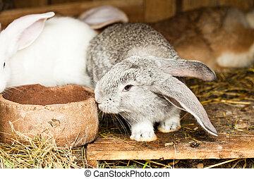 Rabbits' hutch - Three different rabbits closeup in hutch