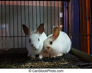 rabbits in a cage of  pet shop