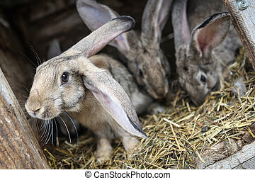 Rabbits in a hutch - Rabbits in a wooden hutch.