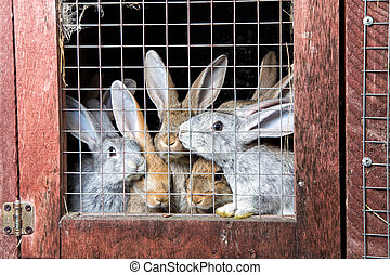 Rabbits in a hutch