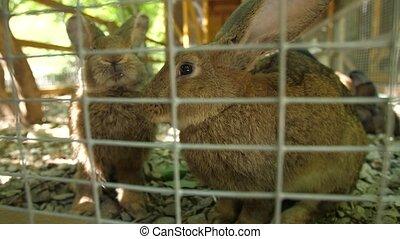 Rabbits in a zoo in a cage - Rabbits in a cage eating