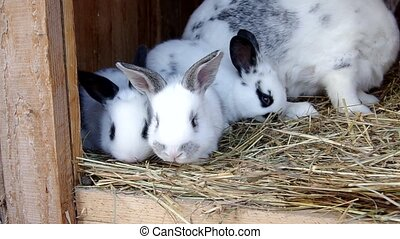 Rabbits in the rabbit hutch