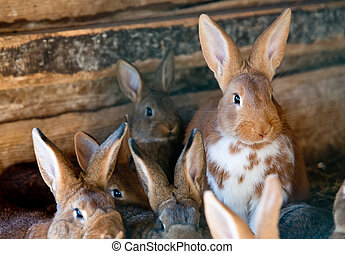 Rabbits - rabbits in the wooden hutch