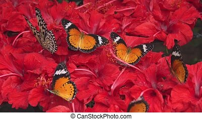 Rabble of Colorful Butterflies Feeding on Flower Nectar....