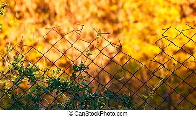 Rabitz. Old fence on background of yellow autumn foliage -...