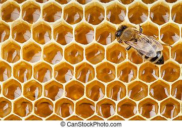 raccolta, colpo, macro, ape, miele, favo