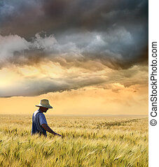 raccolto, contadino, suo, controllo, frumento