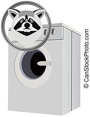 Raccoon and washing machine