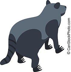 Raccoon animal icon, isometric style
