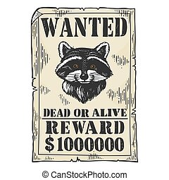 Raccoon criminal reward poster color sketch engraving vector illustration. Scratch board style imitation. Black and white hand drawn image.