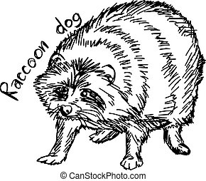 raccoon dog - vector illustration sketch hand drawn with black lines, isolated on white background
