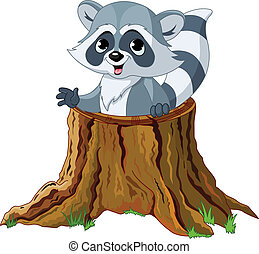 Raccoon in tree stump - Raccoon looking out from a fallen ...