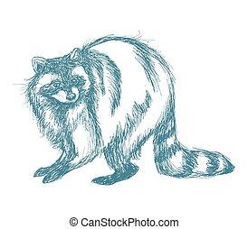 raccoon sketch blue vintage