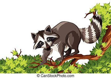 Raccoon standing on the tree