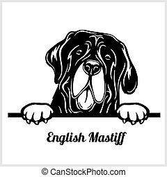 race, anglaise, chien blanc, illustration, mastiff, tête, ...