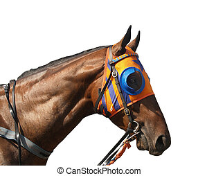 A race horse wearing coloured blinkers
