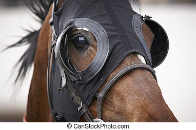 Race horse head with blinkers detail. Horizontal