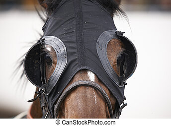 race-horse-head-with-blinkers-detail-sto