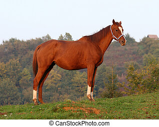 race horse on a hill top