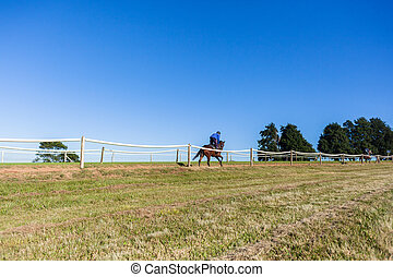 Race Horse Rider Running Training Track