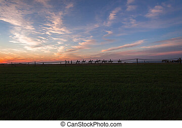 Race Horses Riders Landscape