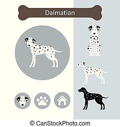 race, infographic, dalmatien, chien