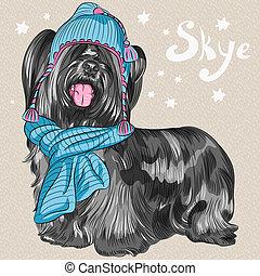 race, skye, chien, vecteur, hipster, sourire, terrier, dessin animé