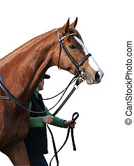 A racehorse and handler with clipping path