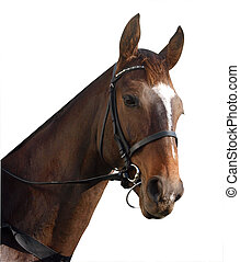 Racehorse isolated with clipping path.