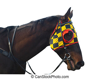 Racehorse with checkered blinkers