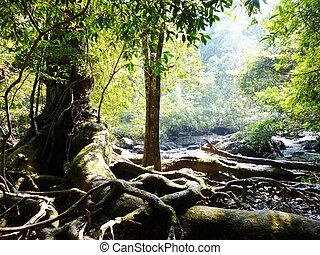 racine, forêt arbre