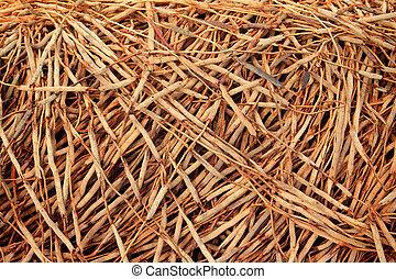 Arbre racines image recherchez photos clipart csp11864779 - Arbre noix de coco ...
