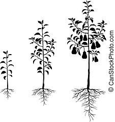 racines, ensemble, poires, arbres, plant