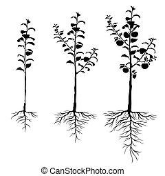 racines, ensemble, pommiers, plant