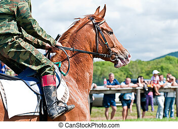 Racing horse befor the start