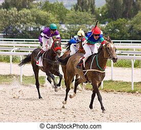 racing., pferd